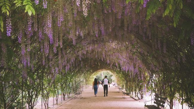 Located on North Terrace, there is a walled garden to explore that is full of nooks for a picnic, as well as the lawns and trees of Botanic Park.Picture: SATC / Liam Pearson