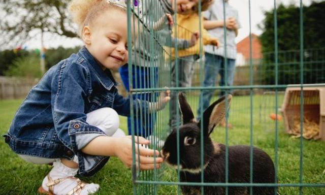How to look after a rabbit as a family pet