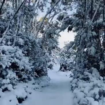 Snow Blankets Hartz Mountains National Park in Tasmania