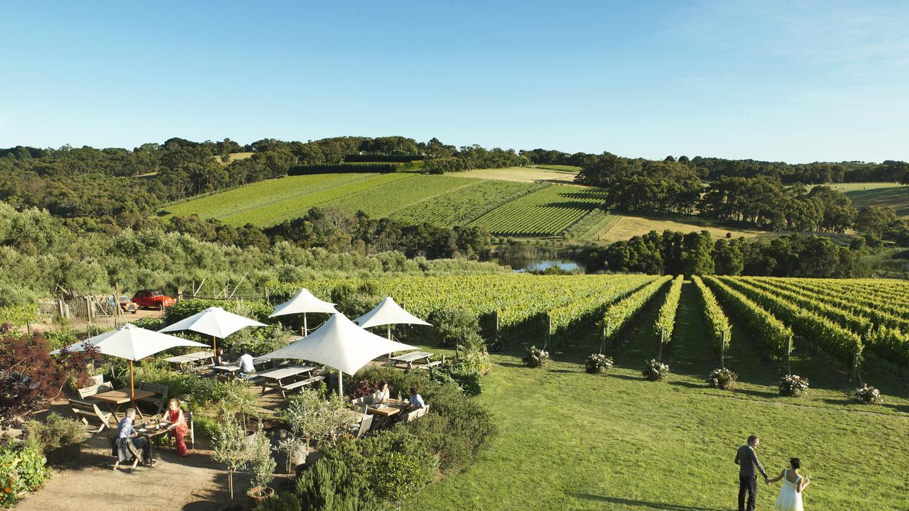 Montalto Vineyard and Olive Grove. Picture: Visit Victoria