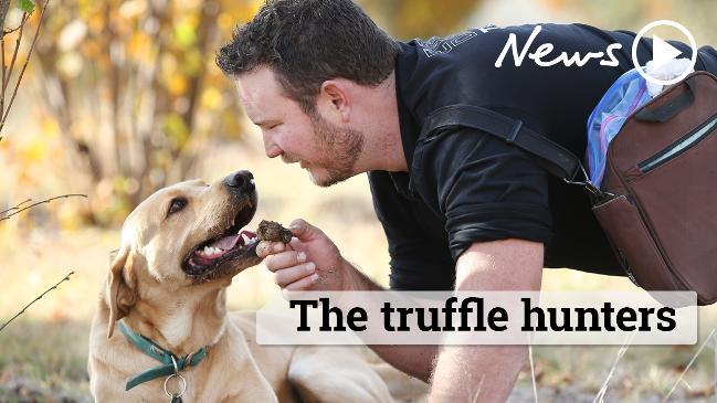Treasure hunting with truffle dogs