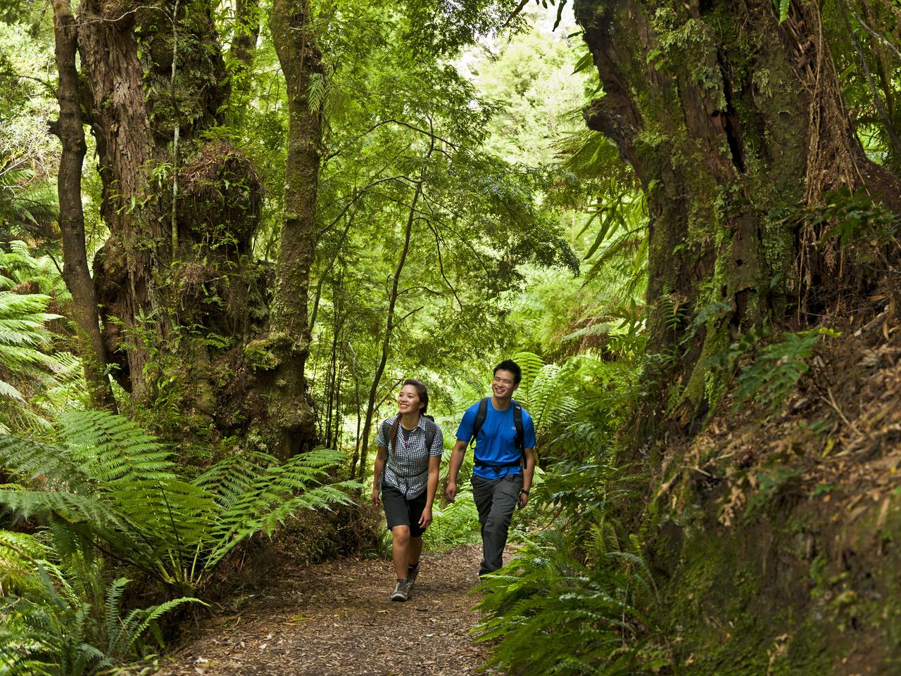Couple walking through Melba Gully Rainforest. Picture: Visions of Victoria