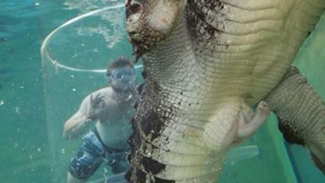 Horny croc at cage of death. Picture: Supplied