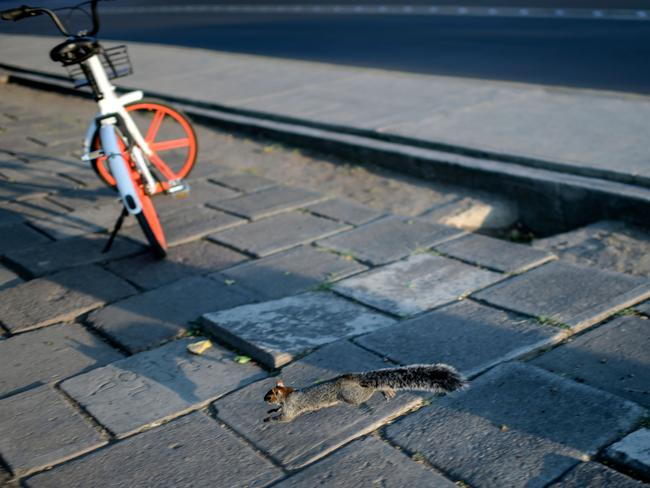 MEXICO CITY, MEXICO A squirrel bounds around the sidewalks that are usually swarming with people in Mexico City. Picture: AFP