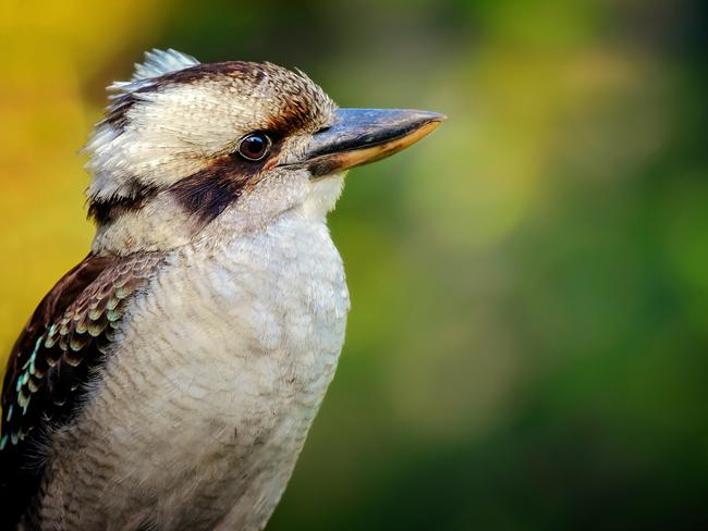 27/27 The sound of kookaburras When you're at home, the laugh of the kookaburra can be pretty annoying, especially if it wakes you up early on a Sunday. However, when you are away from home … well, you miss it. What do you miss when overseas? Email us at escape@news.com.au See also: -7 things every Aussie gets wrong in the USA -Biggest culture shocks in the UK