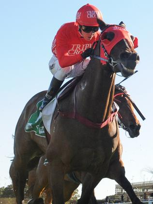 Horse Racing News and Thoroughbreds   Daily Telegraph