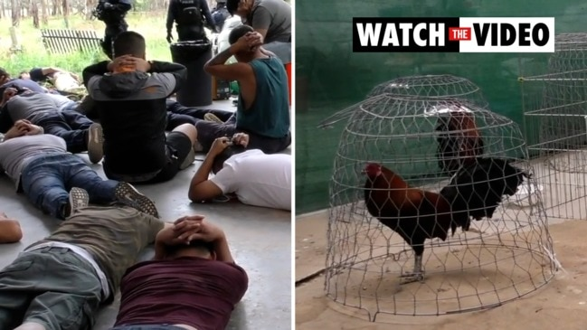 Illegal cockfighting syndicate dismantled