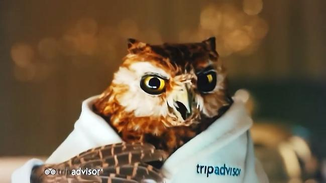 Cute owl advert from Trip Advisor