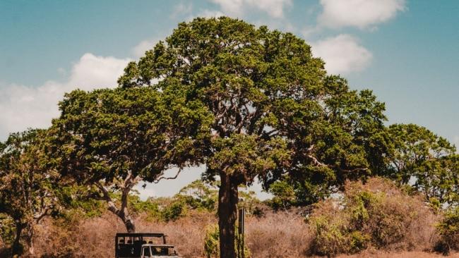 Yala National Park, Hambantota, Sri Lanka. Picture: Fergus So/Unsplash
