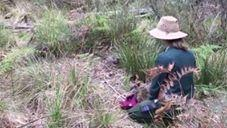 Endangered Rock Wallabies Released Back Into the Wild. Credit - ACT Parks and Conservation Service via Storyful
