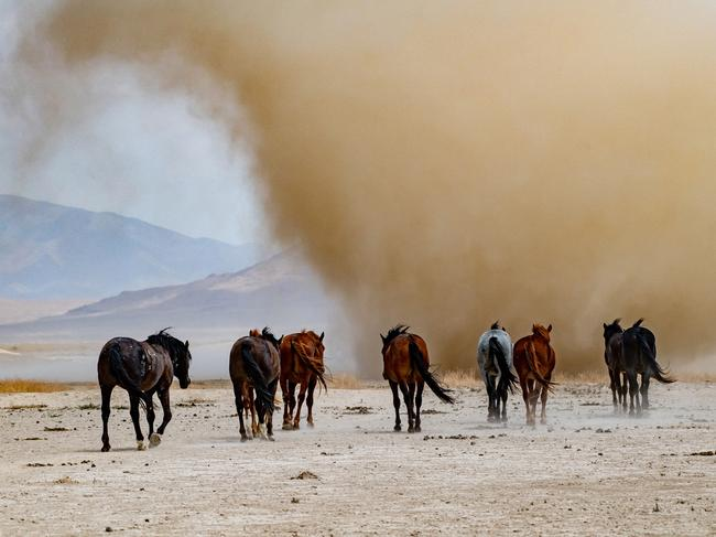 """BEST THRILLS & ADVENTURES PORTFOLIO: BRIAN CLOPP (USA)  DUGWAY PROVING GROUND, UTAH, USA: """"A band of wild stallions walk unafraid towards a looming dust storm. They are accustomed to their harsh desert environment and face whatever challenges nature throws their way."""" Picture: Brian Clopp/tpoty.com"""