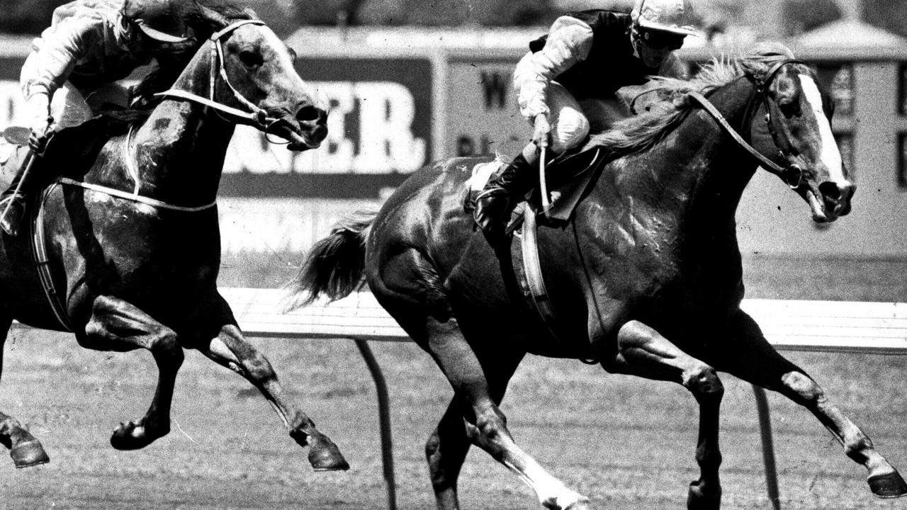 Rory's Jester, (Darren Gauci) beats Prince Gay Lord. b/w. f/l. a/ct. November 1985. /racing /racehorses