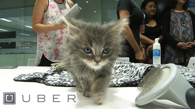 Uber Kittens take a trip to the office