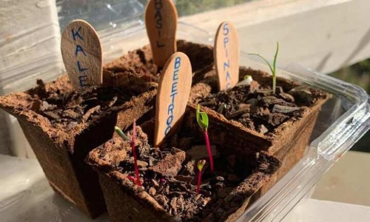 Seedlings still available for Discovery Garden fans