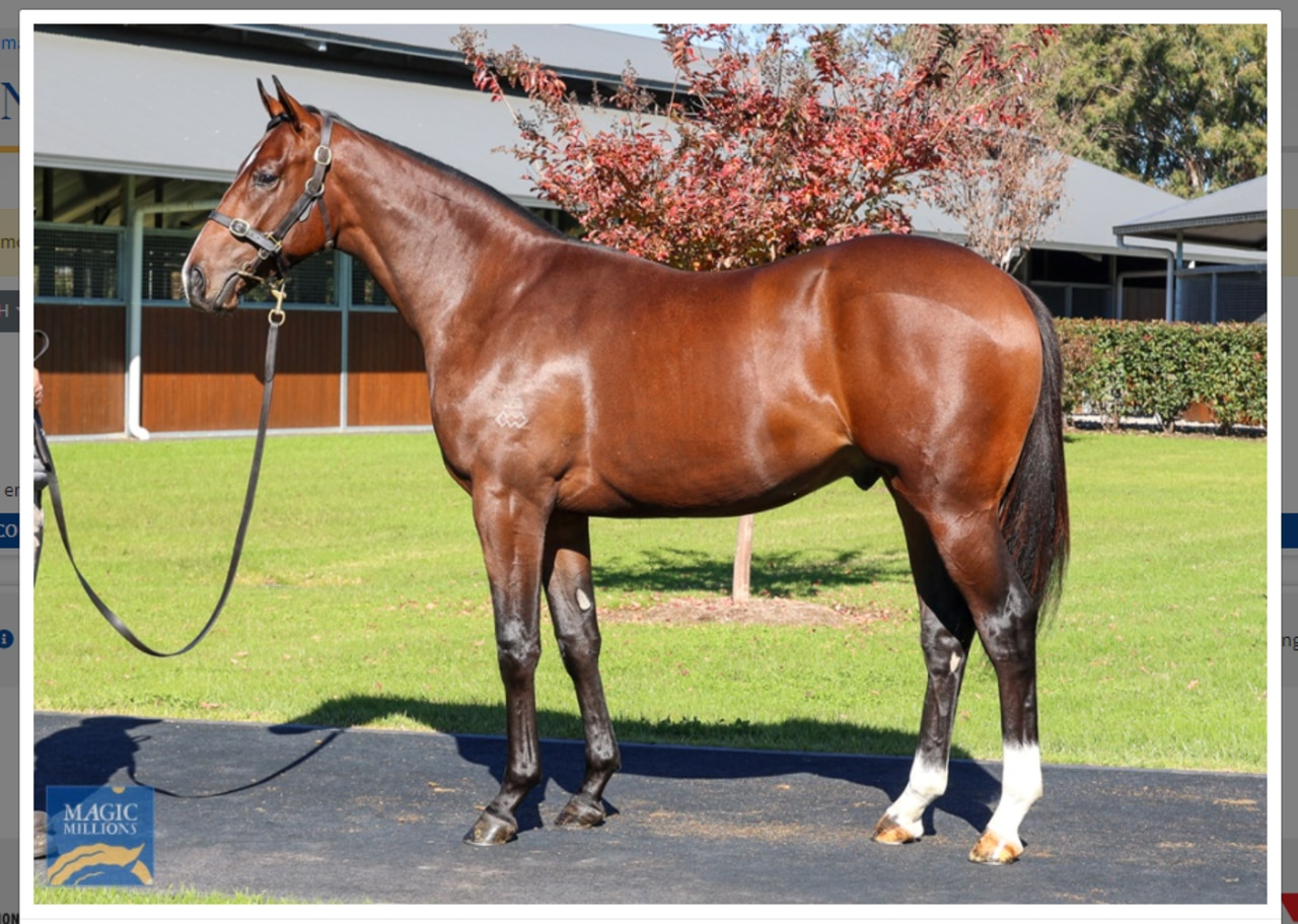Lot 1401 - Magic Millions National Yearling Sale - The last Redoute's to be sold. Redoute's Choice ex La Fouine Tail $210,000 to Chris Waller Racing/Mulcaster Bloodstock.  Photo: Magic Millions.