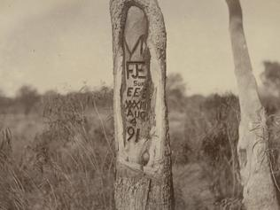One of the other trees carved by the Wells expedition