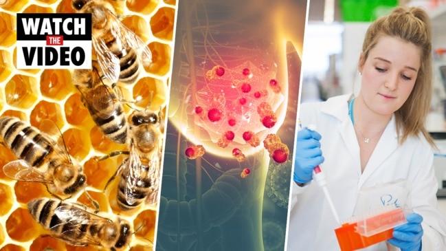Honeybee venom found to kill cancer