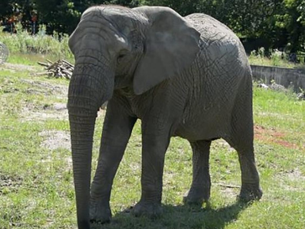 One of the elephants that calls Warsaw Zoo home. Picture: Warsaw Zoo/CNN
