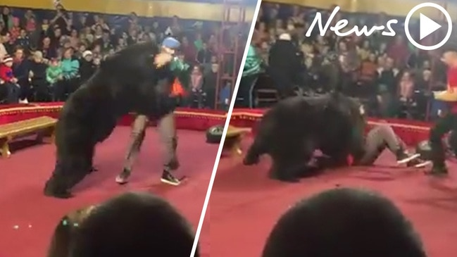 Video show circus bear mauling trainer at Russian circus