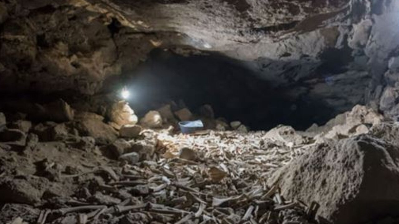 Hundreds of thousands of bones have been found in an underground cave in Saudi Arabia.