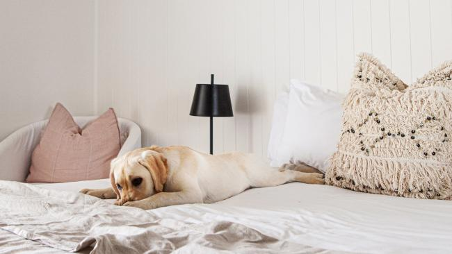 """These days even five-star hotels are throwing their doors open to our four-legged friends. """"Travelling with pets has become more and more popular over the past 18 months at the same time as road-tripping holidays have also been a huge hit with Aussie travellers,"""" says NRMA Parks and Resorts CEO, Paul Davies. Here are some things to consider."""