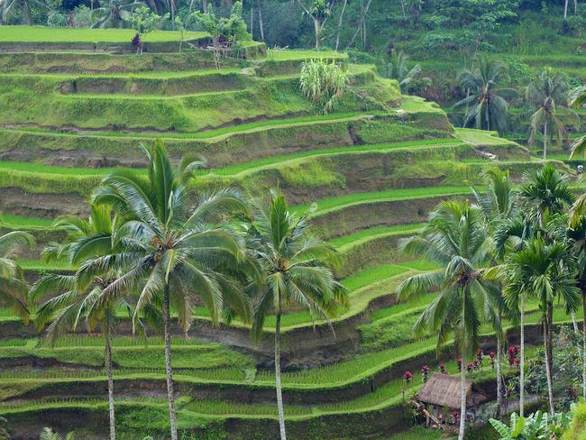 The rice terraces of Bali. Picture: McKay Savage