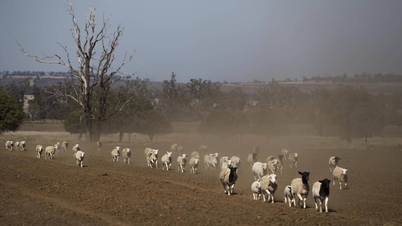 The drought-affected property of Bill and Lyn Guest near Narrabri, New South Wales. Picture: Dylan Robinson