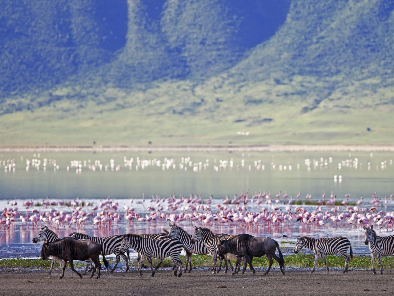 ESCAPE: CONVERSATION STARTER DESTINATIONS .. Zebra and flamingo in the Ngorongoro Crater, Tanzania. Picture: iStock