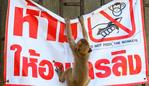 "A longtail macaque tears down a poster reading ""Don't feed the monkeys"" in the town of Lopburi, some 155km north of Bangkok, on June 21, 2020. - Lopburi's monkey population, which is the town's main tourist attraction, doubled to 6,000 in the last three years, forcing authorities to start a sterilisation campaign. (Photo by Mladen ANTONOV / AFP)"