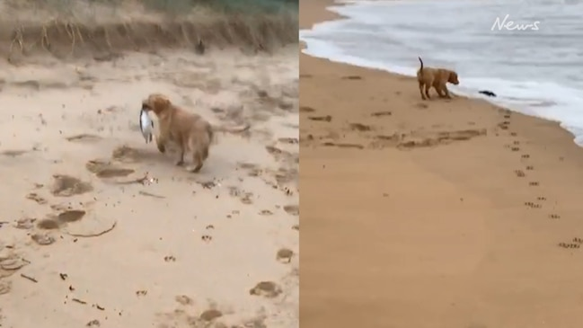Horror at viral video of dog on Aussie beach