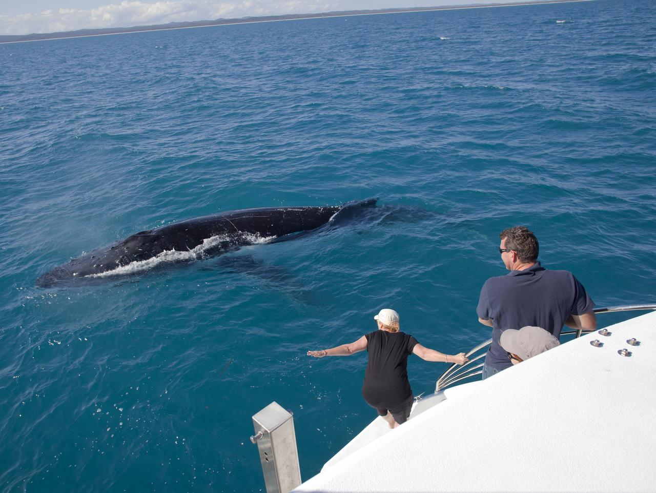Humpback whale in Platypus Bay off Fraser Island.