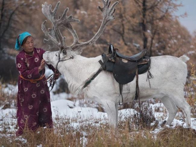 The Gabaa family use reindeers for milk, cheese and transport. And their dung for fire. Picture: Joel Santos/ Barcroft Media via Getty Images.