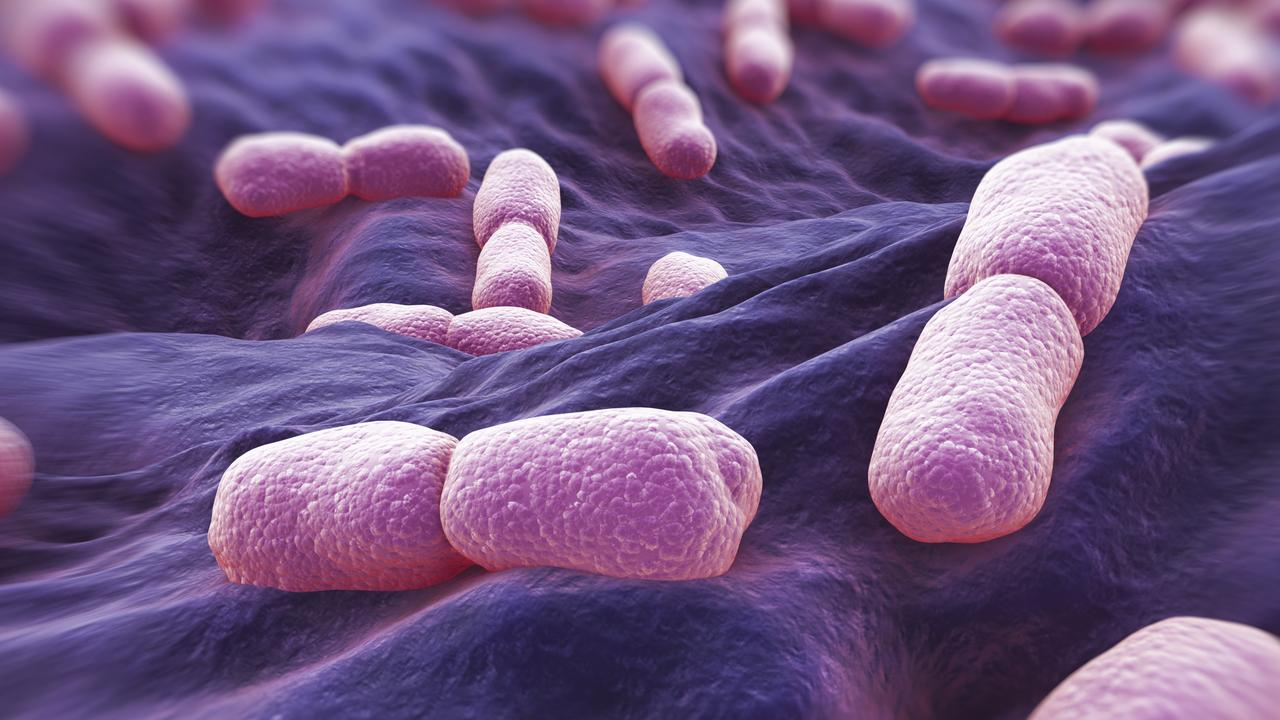 Listeria bacteria (above) can infect raw oysters, cold meats, per-packaged salads and rockmelon.
