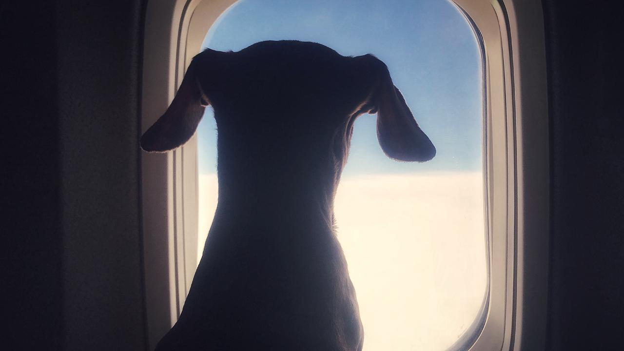 Pet owners are an increasing force in travel.