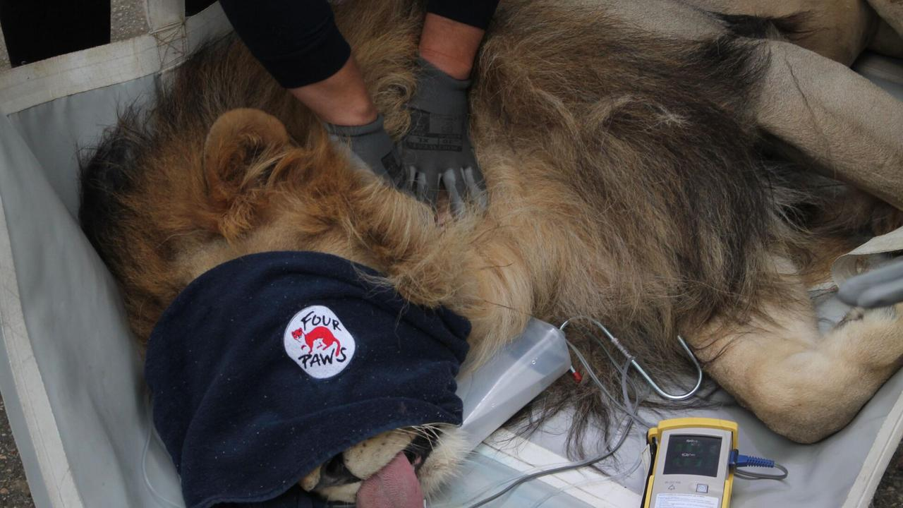 Police have had to break the entrance gate of an Albanian zoo to rescue 11 neglected wild animals. Picture: Four Paws