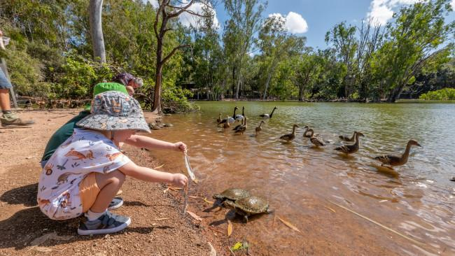 4/26Billabong SanctuaryHere, just south of Townsville, visitors can interact with Australia's iconic native animals in a setting equally iconic, on the shores of a billabong. Picture: Tourism and Events Queensland