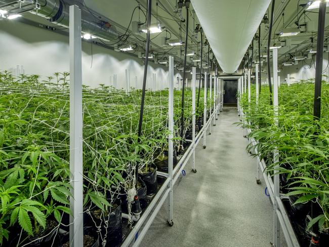 Indoor nursery for the cultivation of medical marijuana, complete with specially designed lighting and HVAC systems. Photo: istock