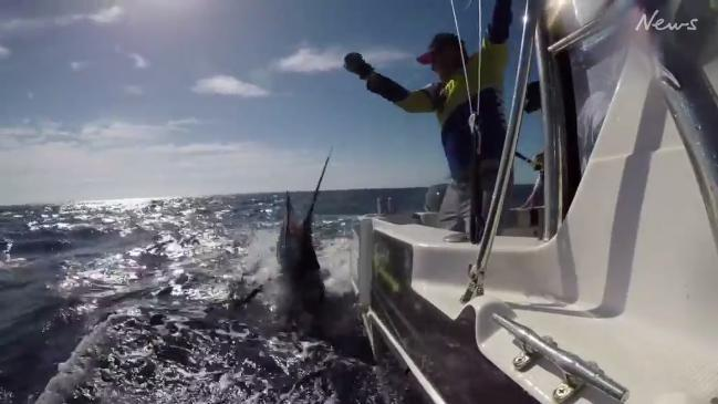 Close call with a marlin