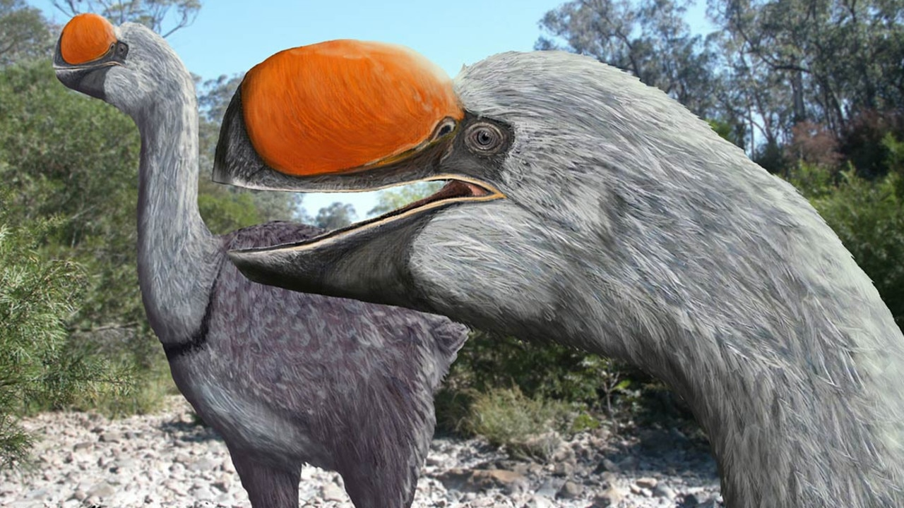 Artist's impression of giant flightless birds that roamed the plains of Australia until about 50,000 years ago. Picture: Brian Choo