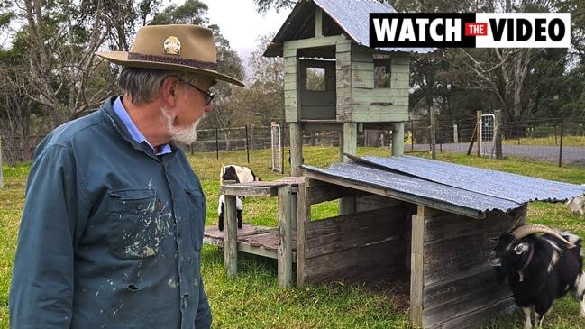 Australian Miniature Goats