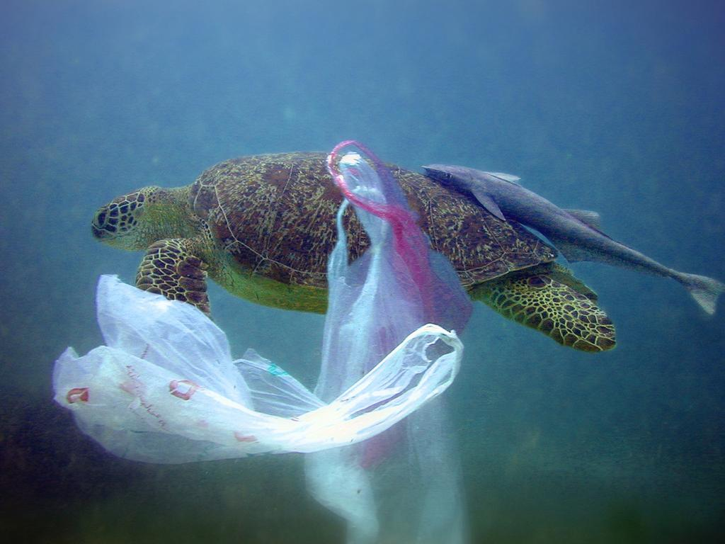 A turtle swims past plastic waste. It's the plastic you can't see in this picture that is entering our food chain..