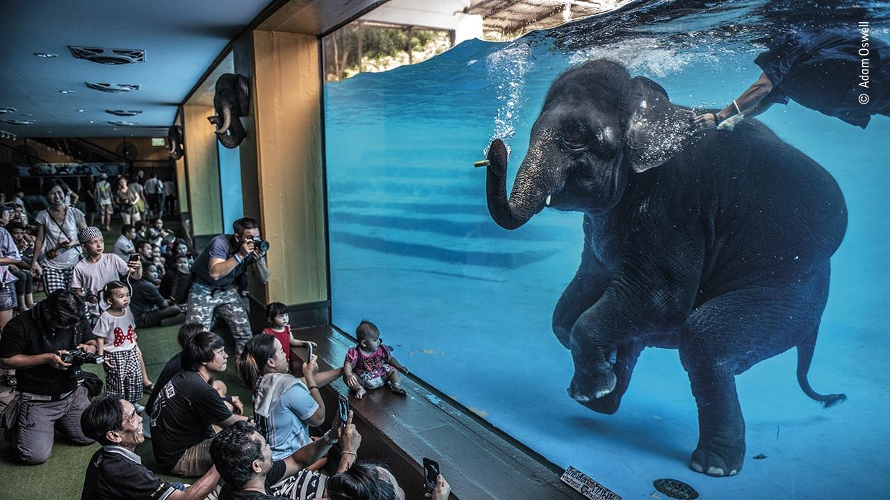 Elephant in the room by Adam Oswell, Australia Winner. Picture: Adam Oswell/Wildlife Photographer of the Year