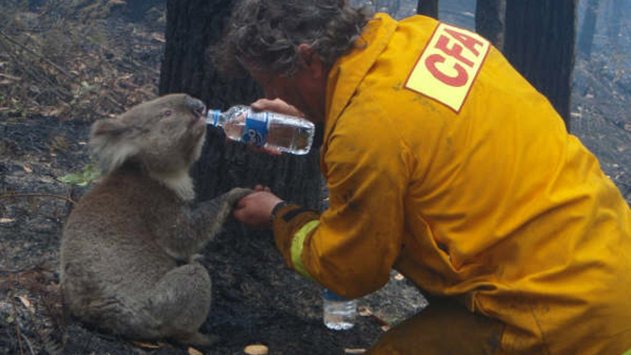 A famous photo of volunteer firefighter David Tree of Mirboo North CFA sharing a drink of water with a koala he'd rescued on February 9, 2009.