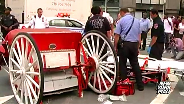 Runaway horse carriage injures Aussie