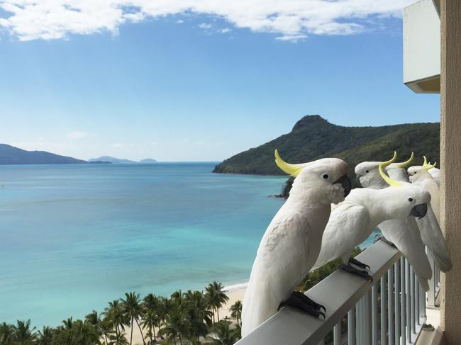 Take a hike on the island's network of walking trails and if you want to explore further, there are half or full-day cruises to Whitehaven Beach. Or just kick back on your balcony with sea views and cockatoos. Holidays don't get easier than this.  — Escape assistant digital editor Melinda Browning