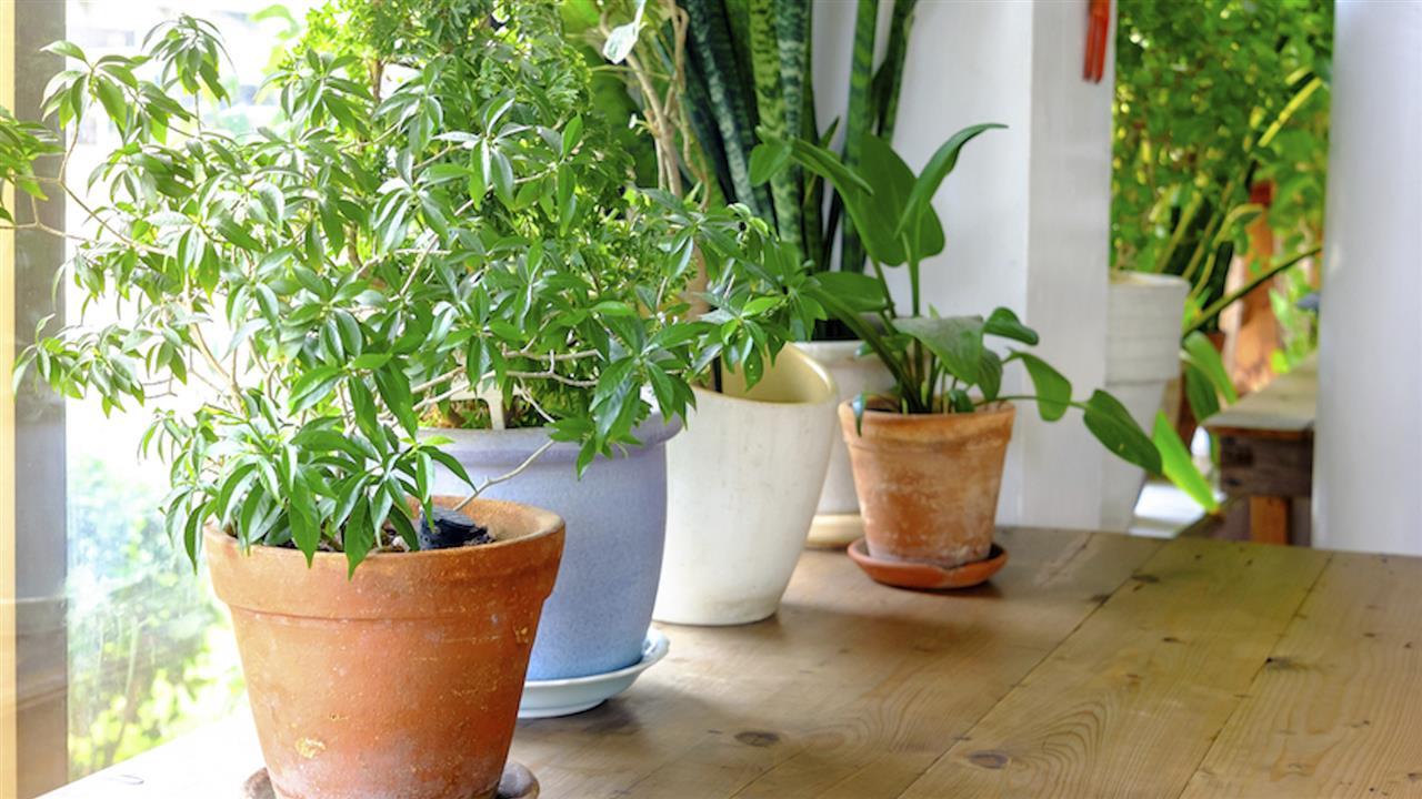 The Health Benefits of Houseplants