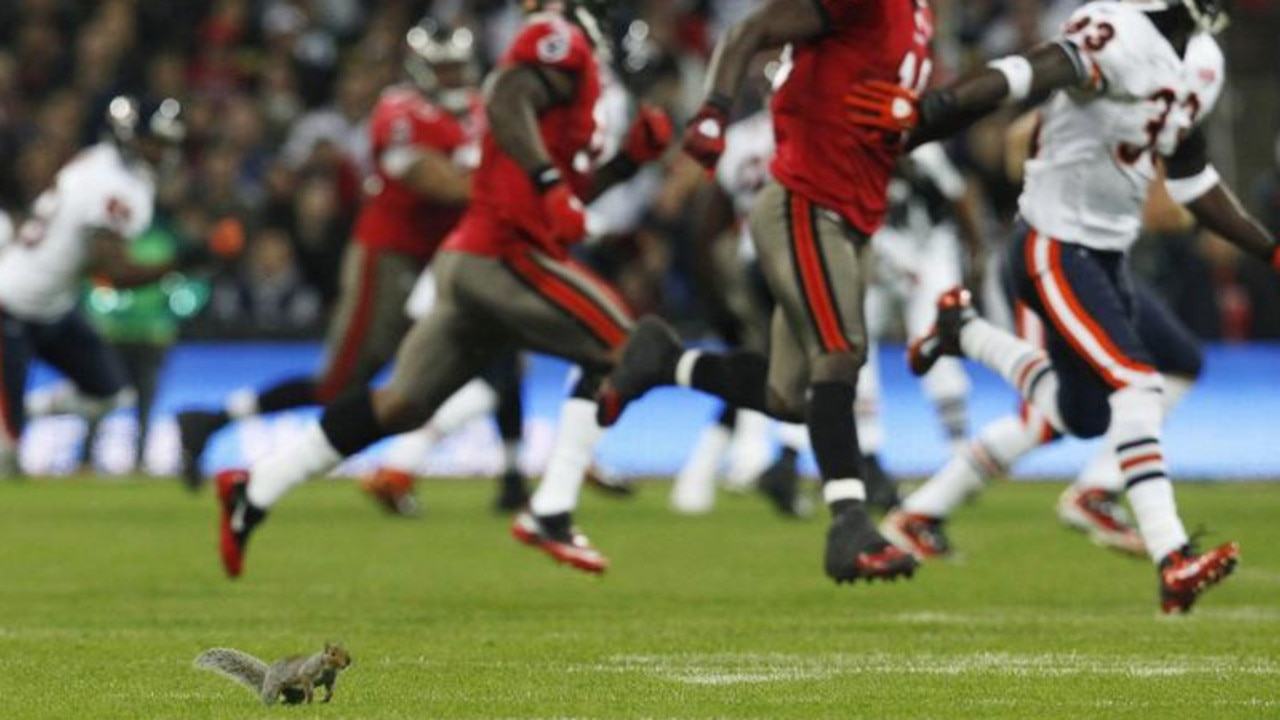 A squirrel runs on the field during the NFL game between the Chicago Bears and Tampa Bay Buccaneers at Wembley stadium in London, UK, October 2011. Picture: Reuters