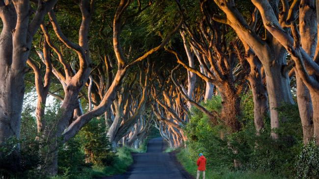 Dark Hedges - County Antrim, Northern Ireland You just try and hold back humming the Game of Thrones theme tune as you walk down the Dark Hedges. Fans will recognise this as the King's Road. Non-fans will recognise it as being eerily pretty. If you're hardcore into Thrones, there are tons of other GOT filming locations to check out around the world.
