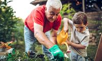 How much are grandparents helping raise the kids?