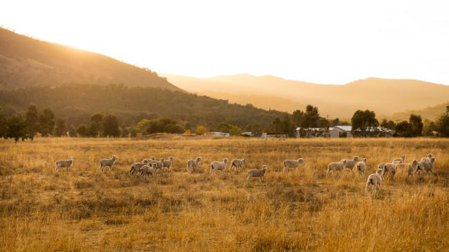 8. Mudgee, New South WalesMudgee's plethora of farms, wineries, and cosy accommodations - all scattered throughout the region's picturesque countryside - make it the perfect place for a relaxing and indulgent weekend getaway. See also:The ultimate guide to Mudgee for every type of traveller